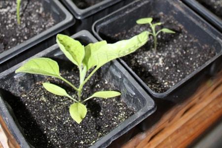Les bons conseils pour jardiner en f vrier terra eco for Conseil pour jardiner