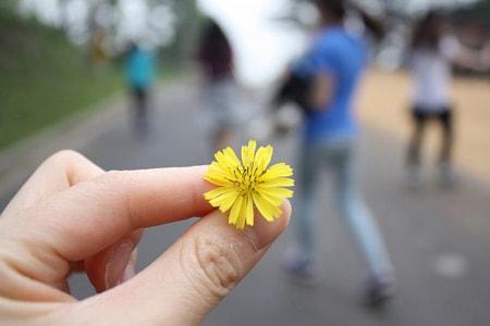 Nantes offre des fleurs aux nantais de les planter for Offre des fleurs