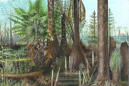 La forêt souterraine qui racontait le climat