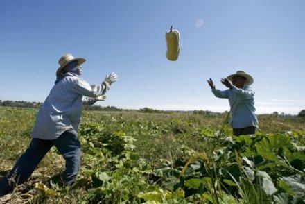 « On peut nourrir 10 milliards d'humains en bio sans défricher un hectare » dans Planéte arton47024-9911f