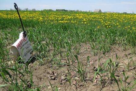 Le Traité transatlantique, la nouvelle arme des vendeurs de pesticides ?