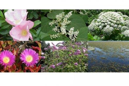 Jardiniers, voici 7 plantes invasives à éviter