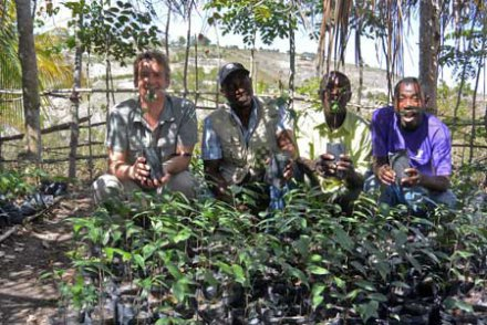 Découvrez les arbres sauveurs, capables de transformer le carbone en calcaire