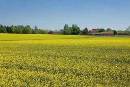Biocarburants : la guéguerre continue